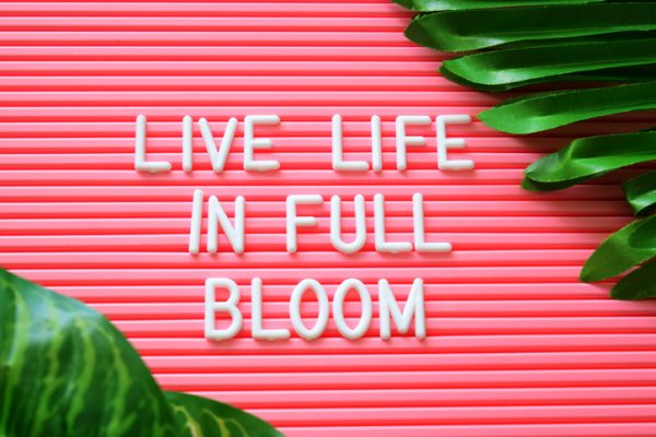 "Letters on Pink board ""Live Life In Full Bloom"""