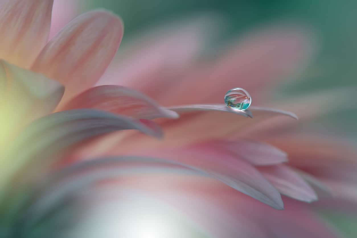 Close-up of rain drop on pink flower petal - minimalism
