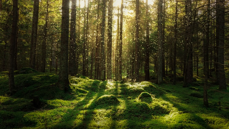 Shaft of light coming through the trees on to a green glade in a forest