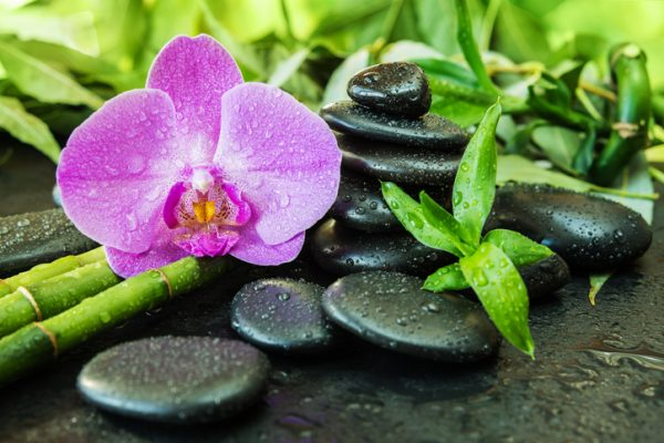 Peaceful Zen picture of black pebbles, bamboo and orchid covered in dewdrops